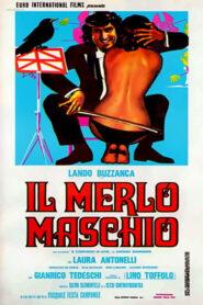 Il merlo maschio 1971