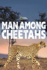 Man Among Cheetahs 2017
