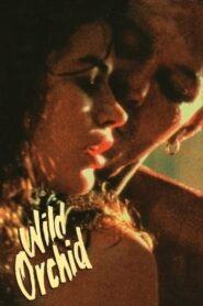 Dzika Orchidea 1989