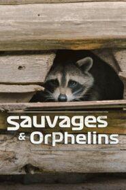 Sauvages et orphelins 2020