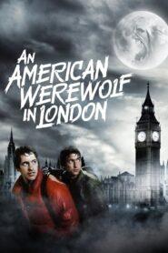 Amerykański wilkołak w Londynie 1981