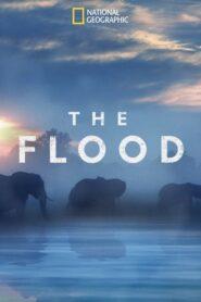 The Flood 2018
