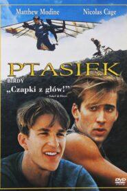 Ptasiek 1984