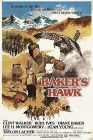 Baker's Hawk 1976