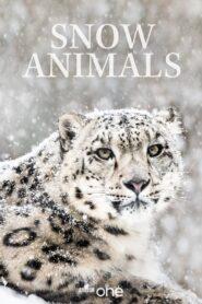 Snow Animals 2019