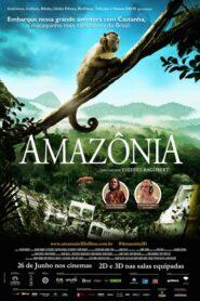 Amazonia. Przygody małpki Sai 2013