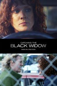Catching the Black Widow 2017
